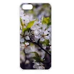 Apple Blossoms Apple Iphone 5 Seamless Case (white) by bloomingvinedesign