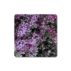 Lilacs Fade To Black And White Magnet (square) by bloomingvinedesign