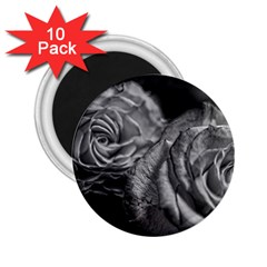 Black And White Tea Roses 2 25  Button Magnet (10 Pack) by bloomingvinedesign