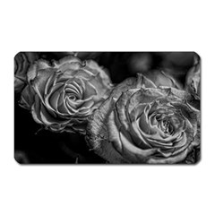 Black And White Tea Roses Magnet (rectangular) by bloomingvinedesign
