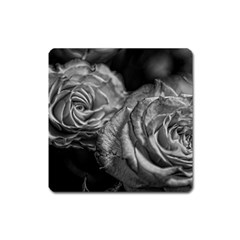 Black And White Tea Roses Magnet (square) by bloomingvinedesign