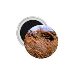 Blowing Prairie Grass 1 75  Button Magnet