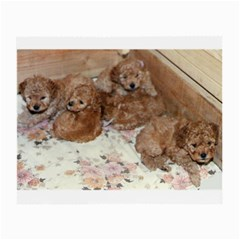 Apricot Poodle Pups Glasses Cloth (Small) by TailWags