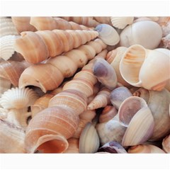 Seashells 3000 4000 Canvas 16  X 20  (unframed) by yoursparklingshop