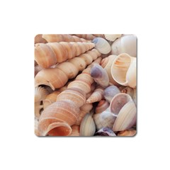 Sea Shells Magnet (square) by yoursparklingshop