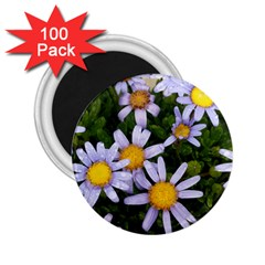 Yellow White Daisy Flowers 2 25  Button Magnet (100 Pack) by yoursparklingshop