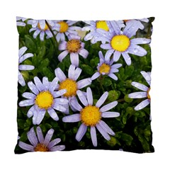 Yellow White Daisy Flowers Cushion Case (two Sided)  by yoursparklingshop