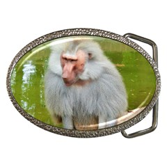 Grey Monkey Macaque Belt Buckle (oval) by yoursparklingshop