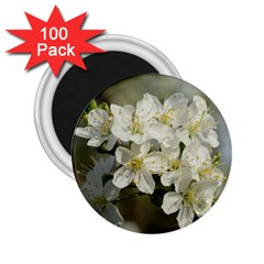 Spring Flowers 2.25  Button Magnet (100 pack) by anstey