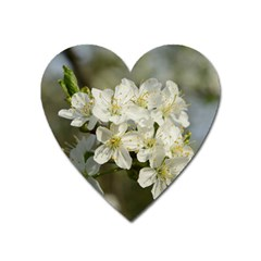 Spring Flowers Magnet (heart) by anstey