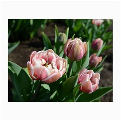 Tulips Canvas 36  x 48  (Unframed) by anstey