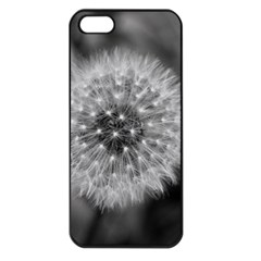 Modern Daffodil Seed Bloom Apple Iphone 5 Seamless Case (black) by timelessartoncanvas