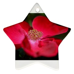 Bright Red Rose Ornament (star)  by timelessartoncanvas