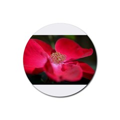 Bright Red Rose Rubber Coaster (round)  by timelessartoncanvas