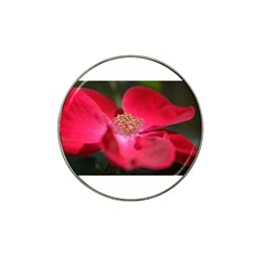 Bright Red Rose Hat Clip Ball Marker (4 Pack) by timelessartoncanvas
