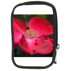 Bright Red Rose Compact Camera Cases by timelessartoncanvas