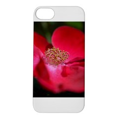 Bright Red Rose Apple Iphone 5s Hardshell Case