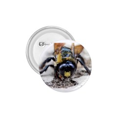 Bumble Bee 2 1 75  Buttons