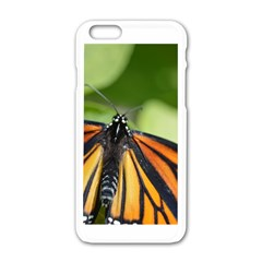 Butterfly 3 Apple Iphone 6 White Enamel Case by timelessartoncanvas