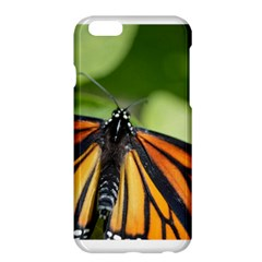 Butterfly 3 Apple Iphone 6 Plus Hardshell Case by timelessartoncanvas
