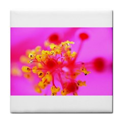 Bright Pink Hibiscus 2 Face Towel by timelessartoncanvas