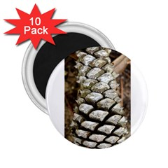 Pincone Spiral #2 2 25  Magnets (10 Pack)  by timelessartoncanvas