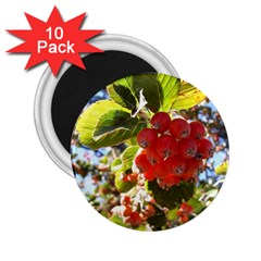 Rowan 2 25  Magnets (10 Pack)  by infloence