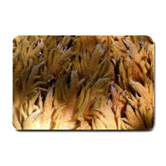 Sago Palm Small Doormat  by timelessartoncanvas