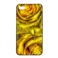 Gorgeous Roses, Yellow  Apple iPhone 4/4s Seamless Case (Black)