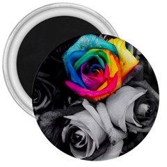 Blach,white Splash Roses 3  Magnets by MoreColorsinLife