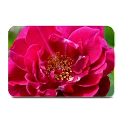 Red Rose Plate Mats by timelessartoncanvas