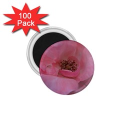 Pink Rose 1 75  Magnets (100 Pack)  by timelessartoncanvas