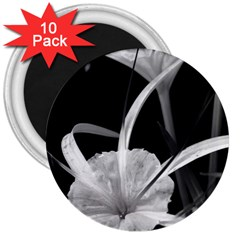 Exotic Black And White Flowers 3  Magnets (10 Pack)  by timelessartoncanvas