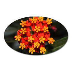 Orange And Red Weed Oval Magnet by timelessartoncanvas