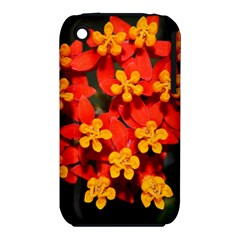 Orange And Red Weed Apple Iphone 3g/3gs Hardshell Case (pc+silicone) by timelessartoncanvas