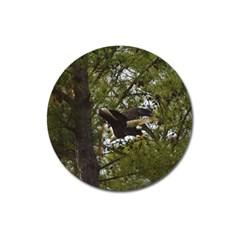 Bald Eagle Magnet 3  (round) by timelessartoncanvas