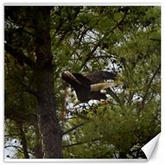 Bald Eagle Canvas 20  X 20   by timelessartoncanvas
