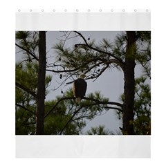 Bald Eagle 4 Shower Curtain 66  X 72  (large)