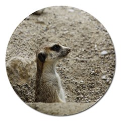 Adorable Meerkat Magnet 5  (Round) by ImpressiveMoments