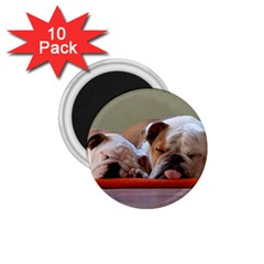 2 Sleeping Bulldogs 1.75  Magnets (10 pack)  by TailWags