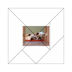 2 Sleeping Bulldogs Acrylic Tangram Puzzle (6  x 6 ) by TailWags