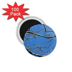 Leafless Tree Branches Against Blue Sky 1 75  Magnets (100 Pack)  by dflcprints