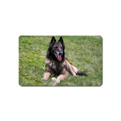 Belgian Tervuren Laying Magnet (Name Card) by TailWags