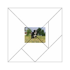 Border Collie Full 3 Acrylic Tangram Puzzle (6  x 6 ) by TailWags