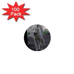 White Wolf 1  Mini Buttons (100 Pack)  by MoreColorsinLife