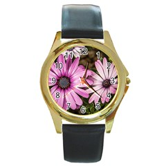 Beautiful Colourful African Daisies  Round Gold Metal Watches by OZMedia