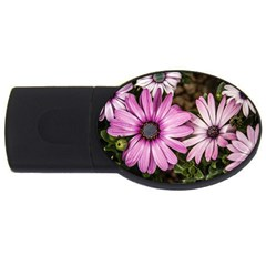 Beautiful Colourful African Daisies  USB Flash Drive Oval (1 GB)  by OZMedia