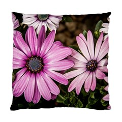 Beautiful Colourful African Daisies  Standard Cushion Cases (two Sides)  by OZMedia