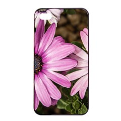 Beautiful Colourful African Daisies  Apple Iphone 4/4s Seamless Case (black) by OZMedia