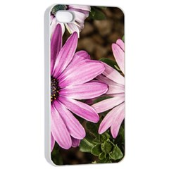 Beautiful Colourful African Daisies  Apple Iphone 4/4s Seamless Case (white) by OZMedia
